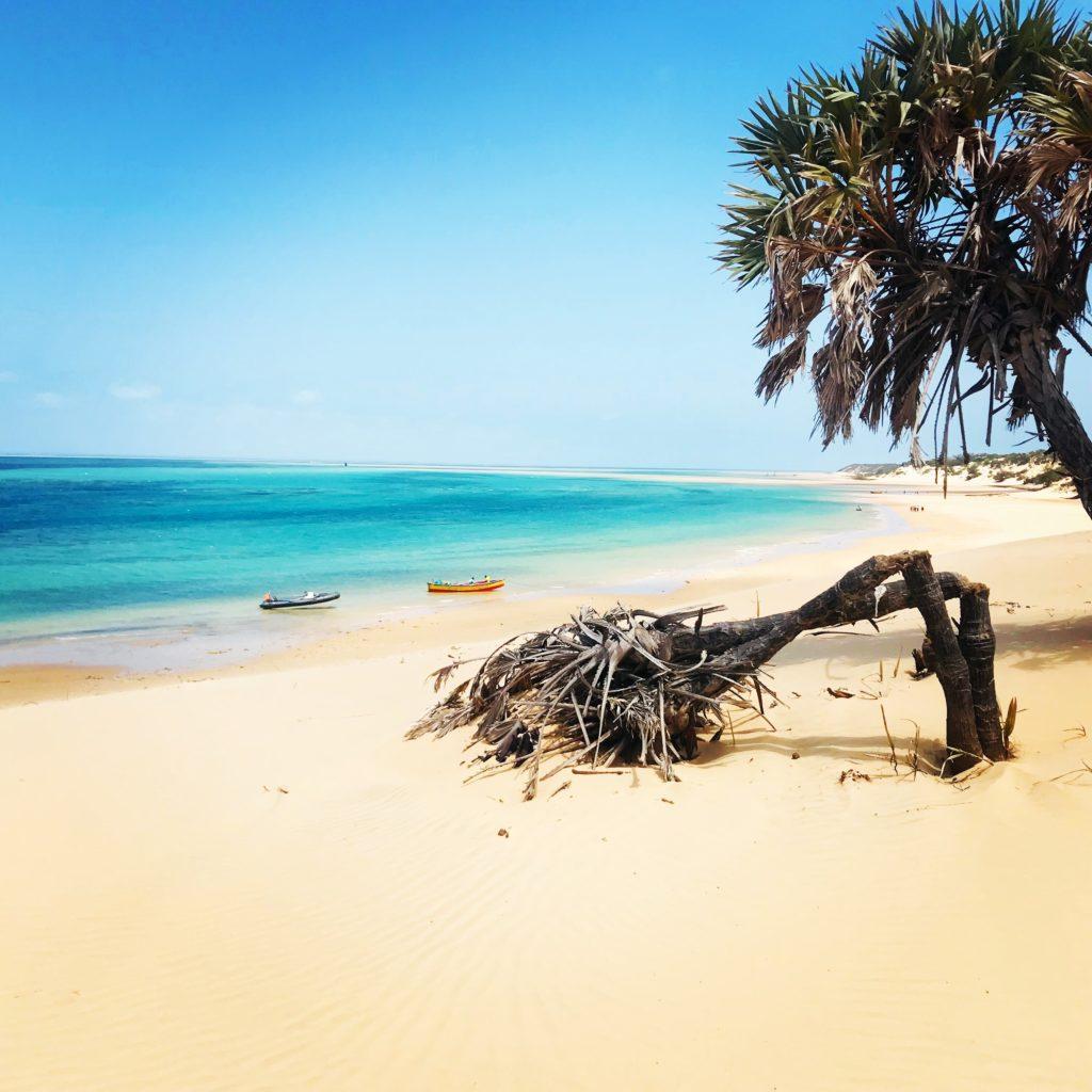 Vertrocknete Palmen im weißen Sand vor dem türkisen Wasser am Strand von Bazaruto