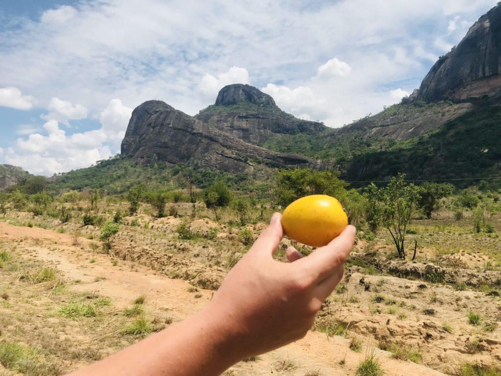 Mango vor den Bergen beim Roadtrip Nampula - Ribaue