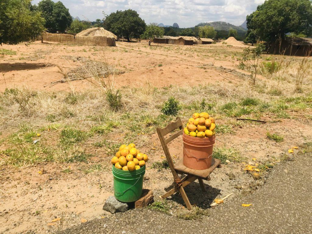 Mangos in Eimern vor dem afrikanischen Dorf nahe Nampula