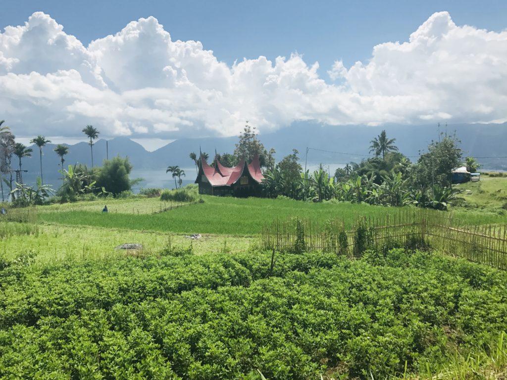 Reisfelder auf der Reise durch Sumatra auf eigene Faust
