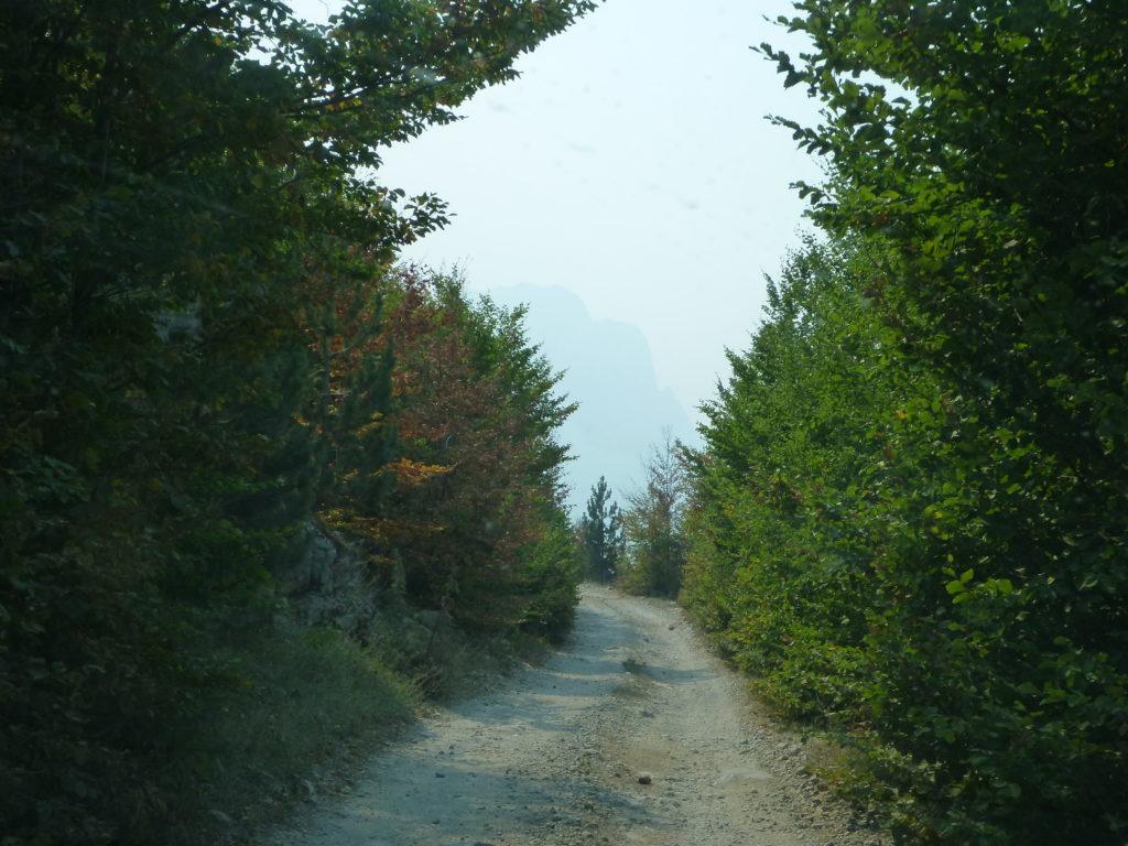 Waldstraße nach Theth - Albanien Tipps für den Roadtrip