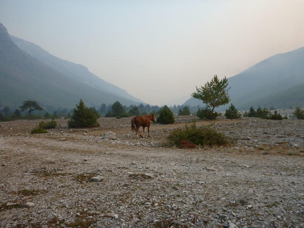 ein Pferd vor den Bergen vor Theth - Albanien Tipps für Wanderungen