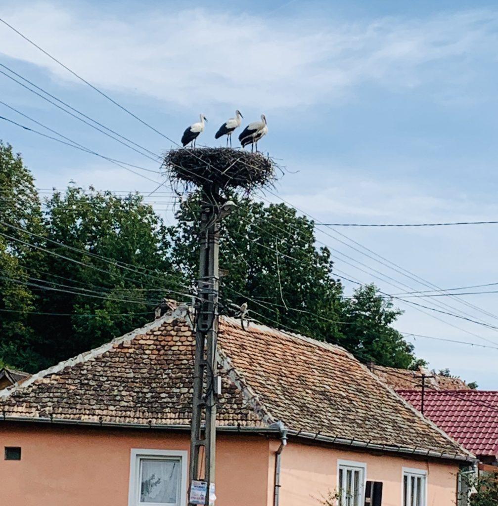 Storchnest in Transsilvanien